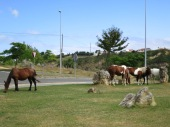 Ponies at a roundabout