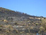 The Aftermath of more fires!