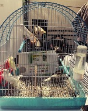 They have loads of little birds in tiny cages here :( Some just normal northern European birds like finches and blacktits
