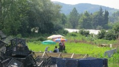 People working the field in the shade of parasols.