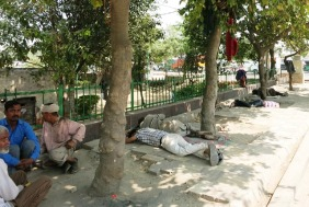 lunchtime snooze in the shade by the road side