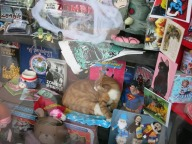Real cat in the shop window