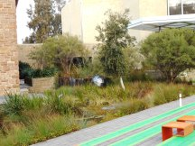 A small patch of wetlands recreated around the Cultural Centre